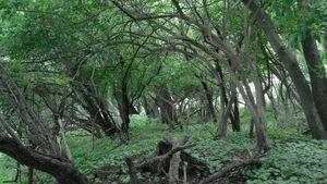 Greenish Woodland