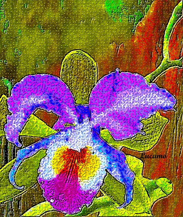 Orchid - Lucamo: Creating with images