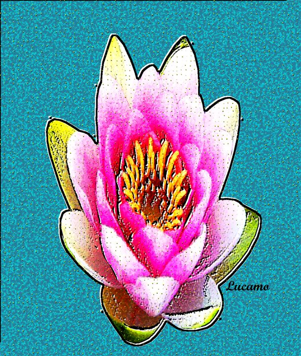 Lotus Flower - Lucamo: Creating with images