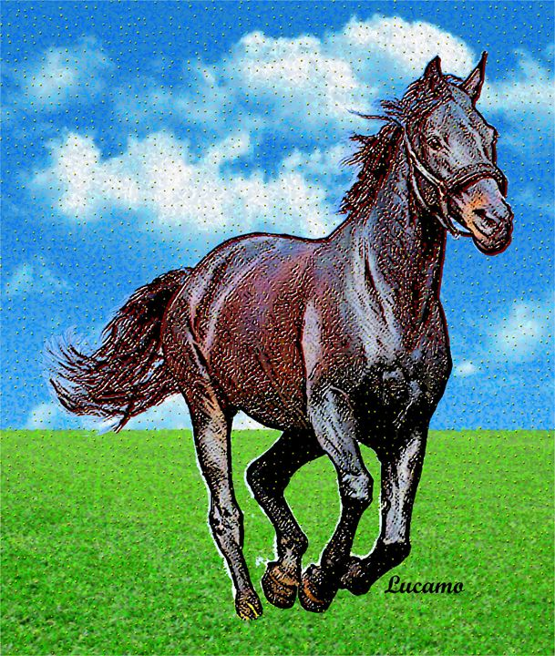 Horse - Lucamo: Creating with images