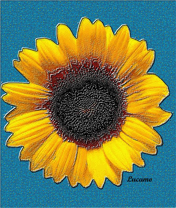 Sunflower - Lucamo: Creating with images