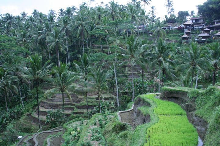 Bali Rice II - Here is the world