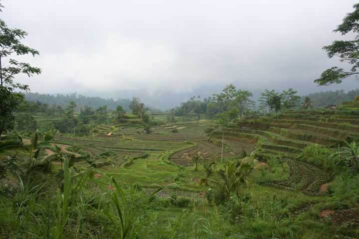Bali rice I - Here is the world