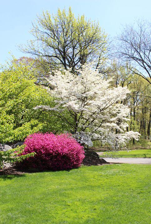 Springtime at the Botantical Garden - JesseEnslingArt
