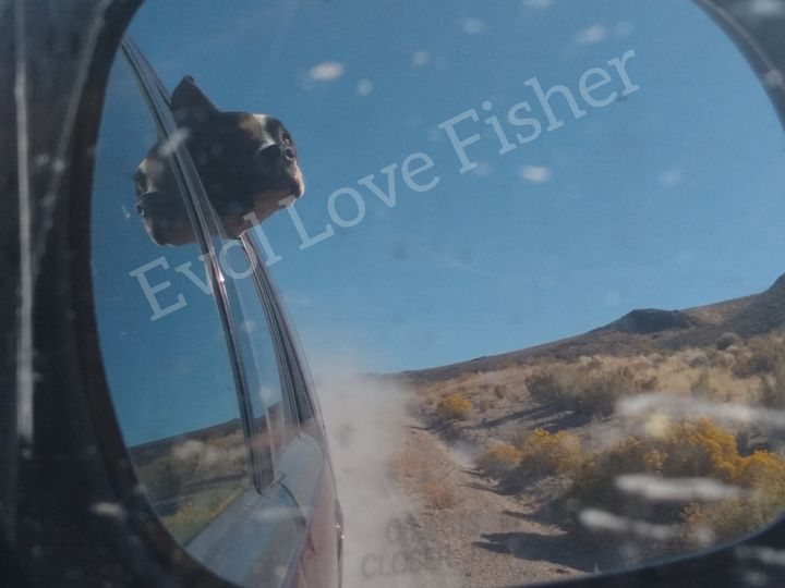 Wind in my face - Evol Love Fisher