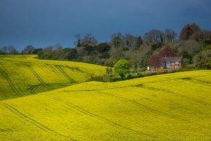 ' Yellow Shore '