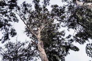 Dark tree - Maor Winetrob
