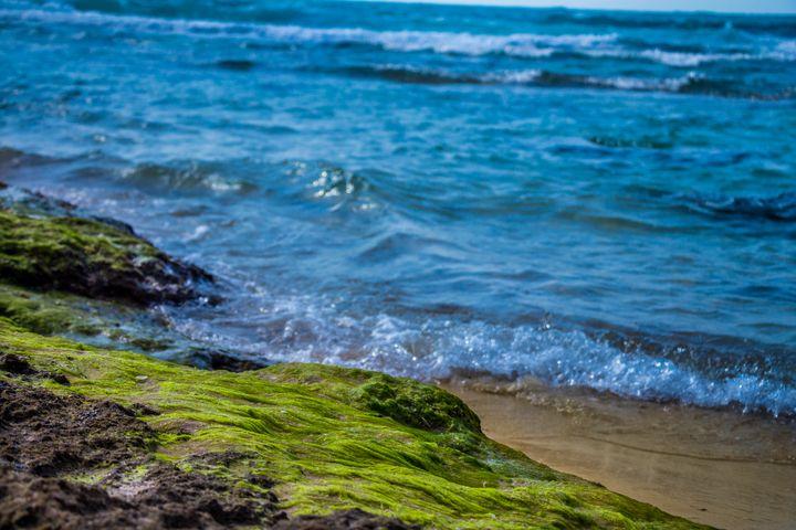 Green algae on a rock on coastline - Maor Winetrob