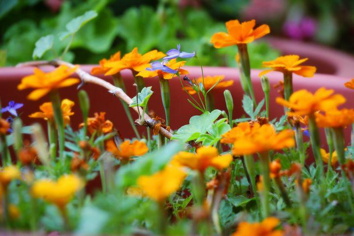 Group of orange flowers - Maor Winetrob