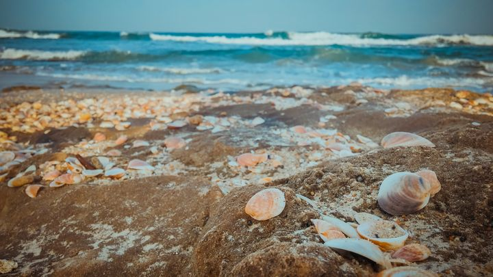 Sea shells on the beach - Maor Winetrob