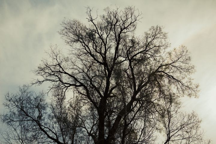 Silhouette of bare tree - Maor Winetrob