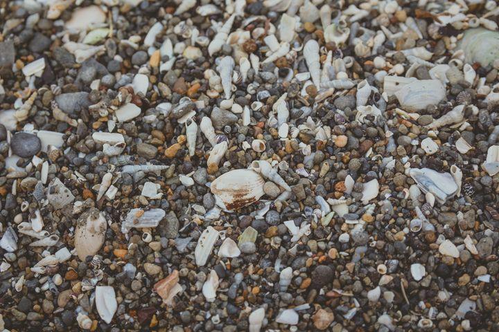 Tiny and large sea shell and rocks - Maor Winetrob