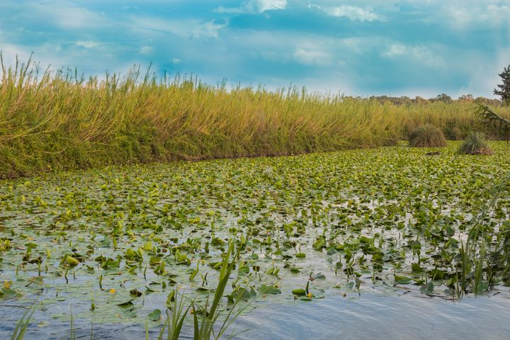 Water Lily Pool - Maor Winetrob