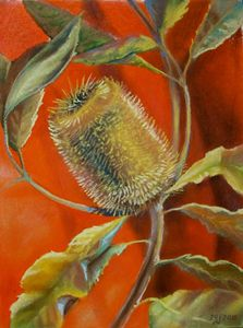 Banksia. Gold on Red.
