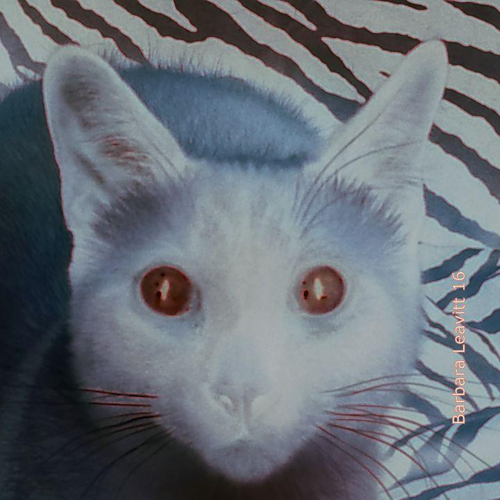 Rat Cat - barbara leavitt