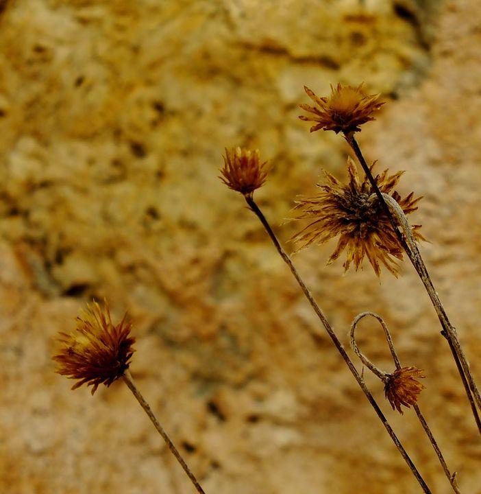 Dry flowers - Nameless