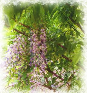 Watercolor Wisteria