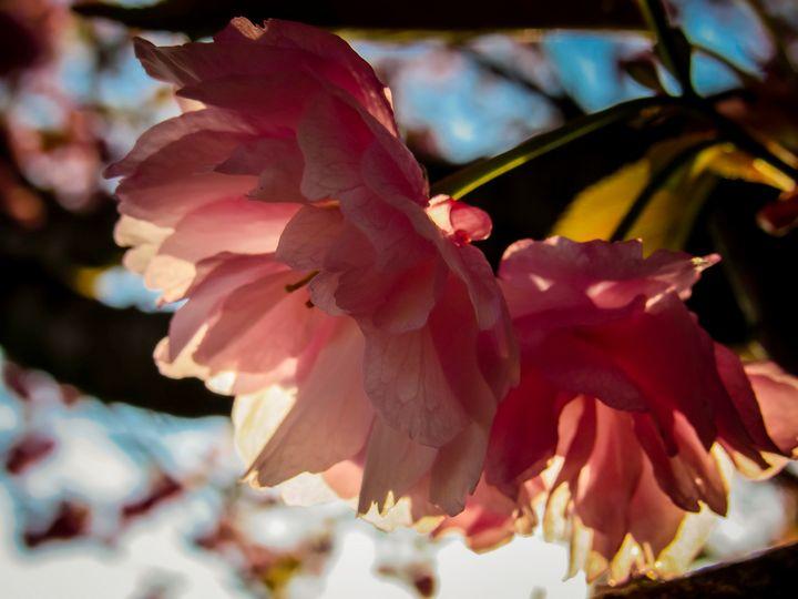 Double Blossom - S. Sarlouis Designs