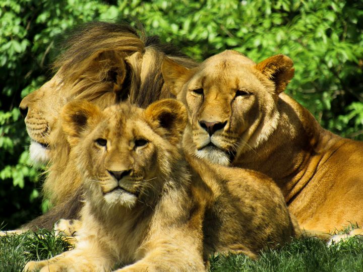 Family Pride - S. Sarlouis Designs