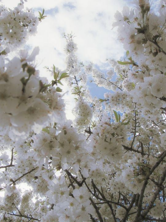 Blossoms for Days - S. Sarlouis Designs