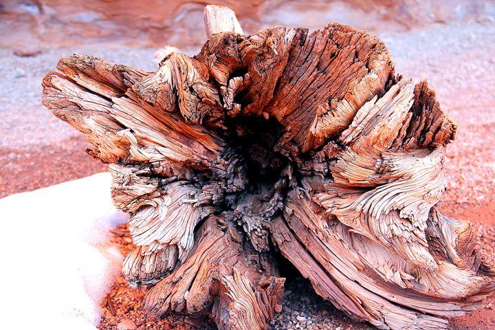 Petrified Wood - Falconz Eye Imagery