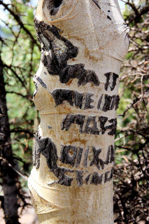 Scarred Aspen One - Falconz Eye Imagery