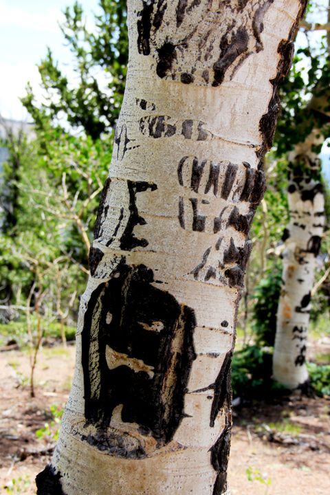 Scarred Aspen Tree Four - Falconz Eye Imagery