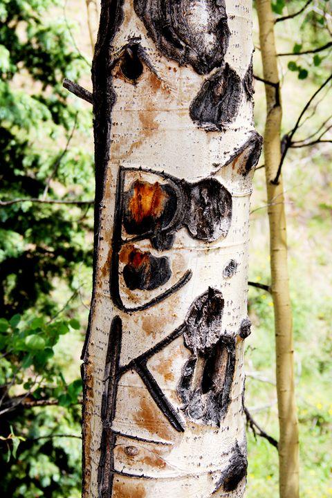 Scarred Aspen Tree Six - Falconz Eye Imagery