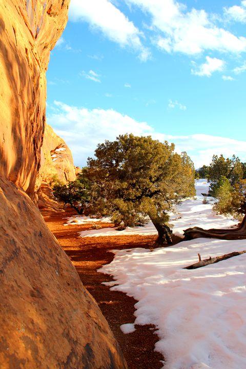 Snowy Canyon Trail - Falconz Eye Imagery