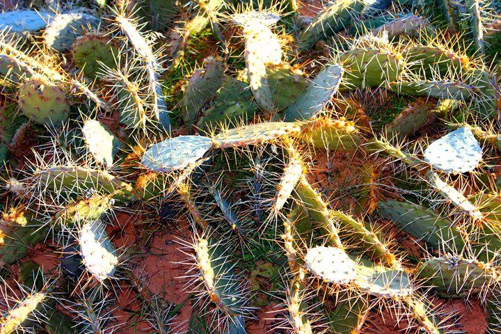 Utah Cactus - Falconz Eye Imagery