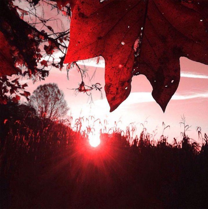 Cherry Landscape - Vicki Lloyd