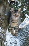 cat in tree after snow fall