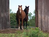 frick and frack  the two horses