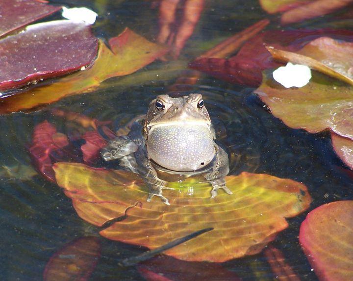 froggy - ninasoriginals