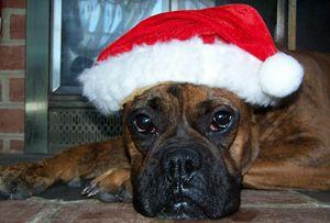 Bella's Christmas