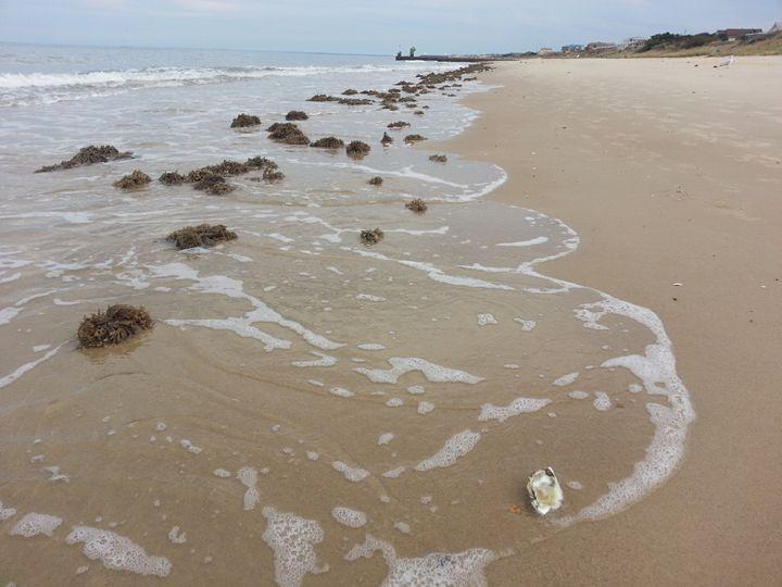 Ocean View Seaweed - Tommy Ditewig