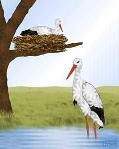 White Storks and Nest - Art by Lorene