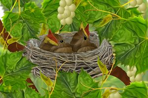 Baby Birds in Nest in Grapevines