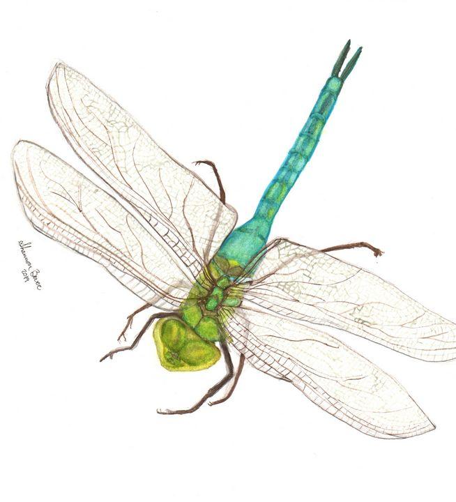 Summertime Dragonfly - Artfulzen