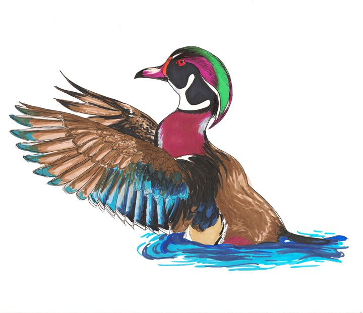 Mister Wood Duck - Art By Marcina