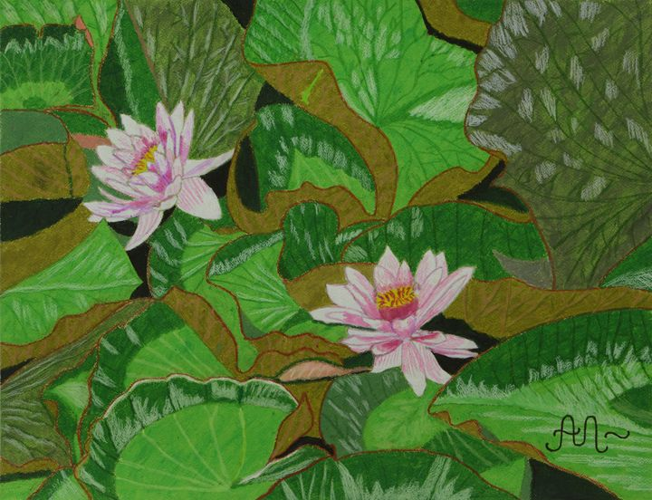 Pink pond lilies - Anton's art from the heart