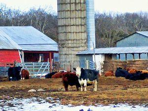 Sweet Farm Faces - Becky Kurth