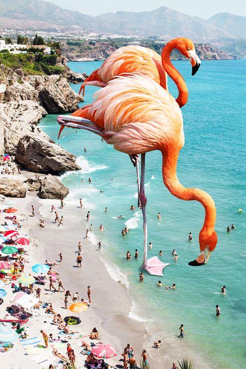 Flamingos on The Beach - 83 Oranges