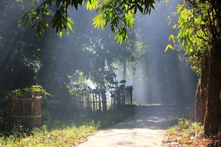 Morning rays - Sanjib phukan