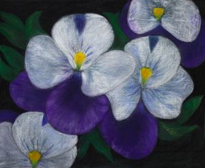 Broad Purples