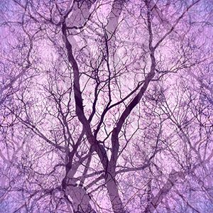 Looking Through Glass Trees