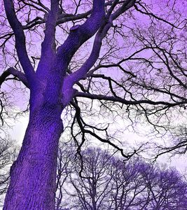 Majestic Tree (purple)