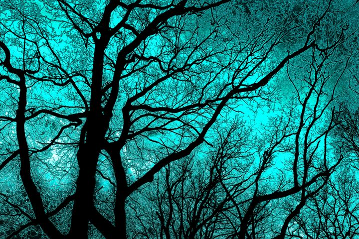 The Trees Know (green-blue) - NCL