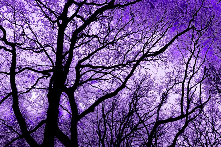 The Trees Know (violet purple) - NCL