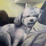 Portrait Oil painting for a poodle